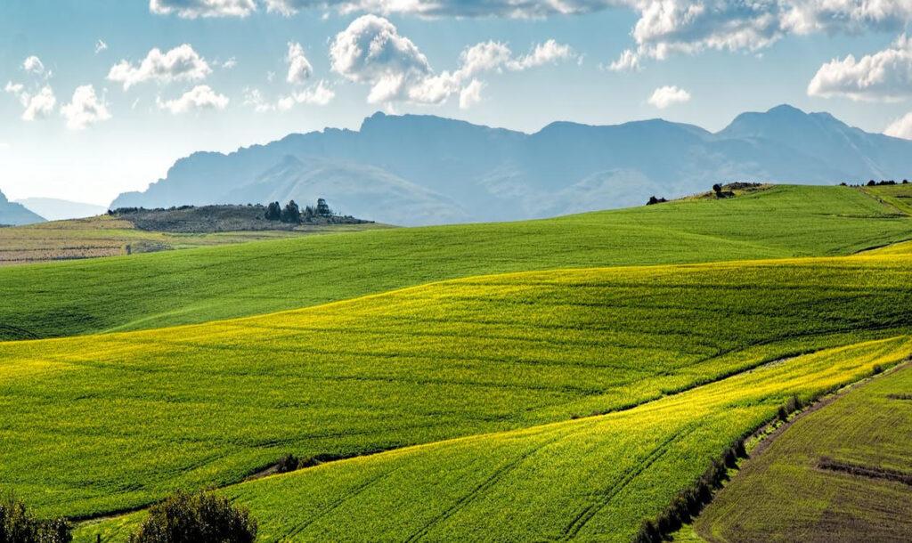FIDA PASCOLO ANNO 2021 – Determinazione n. 43/2021 – Assegnazione Fida Pascolo Terreni gravati da diritto di uso civico Comune di Roccaraso per il periodo 15/05/2021 – 14/05/2022